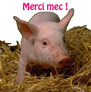 cochon-copie-1