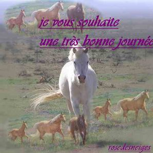 rosedesneiges-chevaux