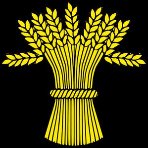 épis blé