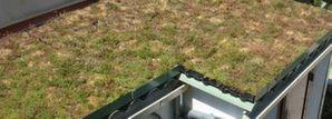 toiture végétalisée à faible biodiversité