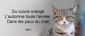 PH-Chat-yeux-automne