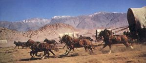 book-cover_wagons_and_horses-545w.jpg