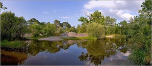 foret fontainebleau mare a1