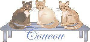 chat-sur-banc.jpg