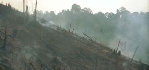deforestation riau indonesia avedder 231525