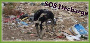 CHIENS-sos-decharge-logo.png