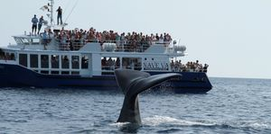 whale-watching-08-07-2012 9480 -3m