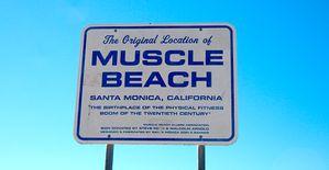 muscle-panneau.jpg