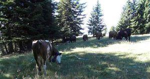 2010-09-09 forêt de Turini (26)