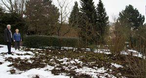 Wildschweine Gaerten Birkental Rasen Hofstetter 1