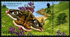 Guernesey87-Empereur-moth.jpg