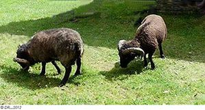 1-Petits-moutons.jpg