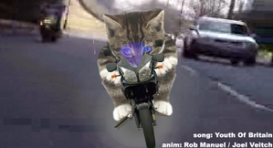chat-moto.PNG