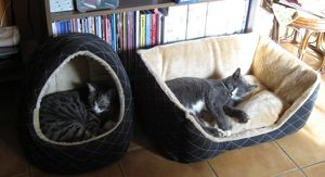 avantprintemps6.JPG