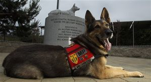 Dogs-of-War-79.jpg