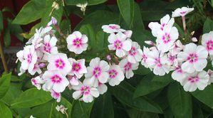 belles-images-fleurs-peq.jpg