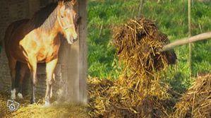 cheval et fumier