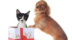 Chien-chat-cadeau-Noël