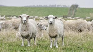 th-490x490-elevage-moutons-credit-agricole-centre-ouest-609.jpg