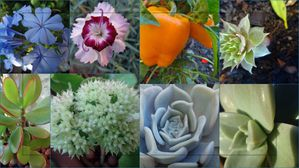 jardin30oct.jpg