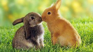 Easter-bunny-kissing-01.jpg