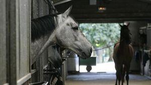 caballos1--644x362.jpg