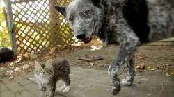 raphlee-le-chaton-et-max-le-chien_65572_w250.jpg