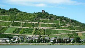 180-Paysage du Rhin
