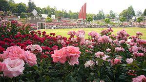 800px-Aramaki_rose_park12s2400.jpg