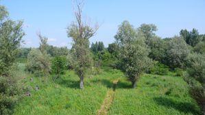 Ripisylve-du-Danube--Novi-Sad--Serbie--1600x1200-.JPG
