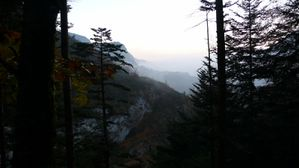 Foret-sauvage-dans-les-Pyrenees-occidentales--1600x1200-.jpg