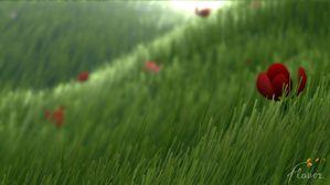Flower - Herbe