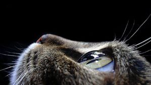 animals-pictures-cat-eyes-macro-photography-1-.jpg