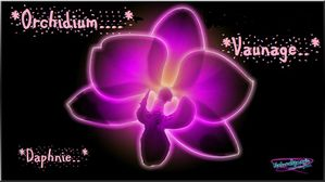 thumb-orchis jaune neon rose-copie-1