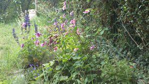 mon-jardin-2011--2--Damien-MUGLIA.JPG
