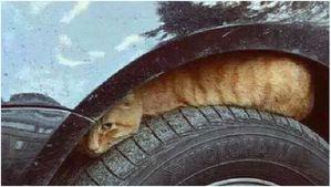 Chat sur un pneu