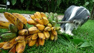 elfy_banana.jpg