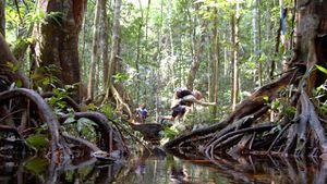 Jungle Marathon 2012 (10^ ed.), Benvenuti nella giungla, il prossimo ottobre!