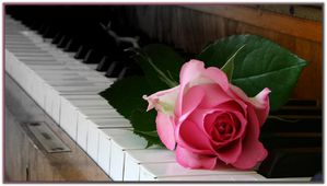 18428875 rose and piano