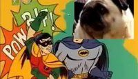 batman-dog.jpg