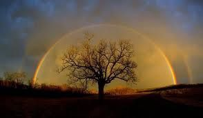 Rainbow over the-Tree