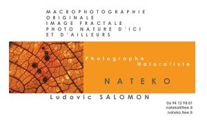 Nateko carte de visite photographe or