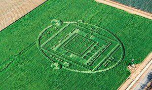 crop-circle-NESARA-300x178.jpg