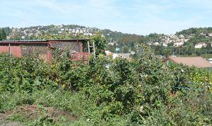 2011 09 15 framboisiers jean moulin