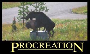 Procreation.jpg