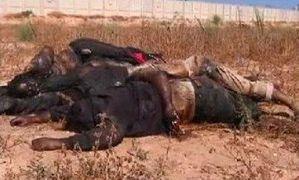 Libye_massacre_de_noirs_texte.jpg