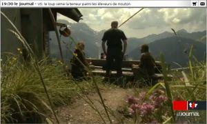 loup-valais-suisse-copie-1.jpg