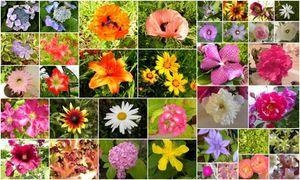 Mosaique-couleurs.jpg