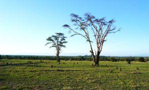 Kenia-Tanzania. Keti 124 Vista Web grande