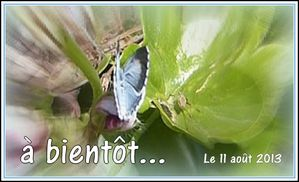 papillon-bleu-3-copie-1.JPG